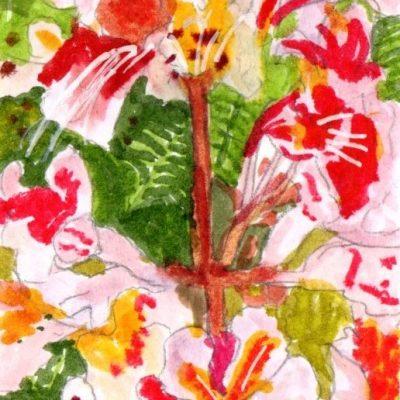 Flores de castaño. 15x9cm.