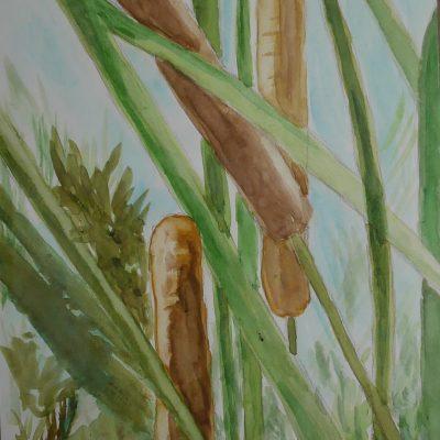 Juncos del jardín botánico | 21x15