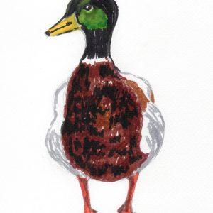36. Pato de Lisboa. 20x15 cm. 50 e.