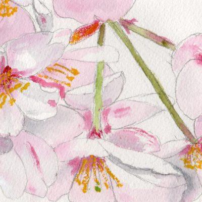 5. Flores de almendro. 10x25 cm. 150e.